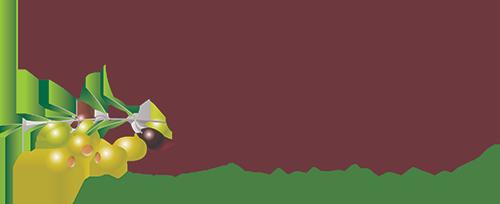 Olives-Logo-500x204